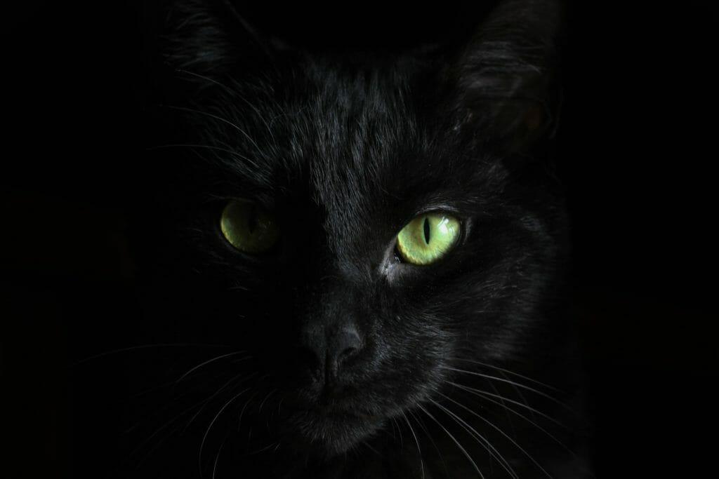 【猫学】めくるめく猫の世界へようこそ。第1回〜猫の世界史〜