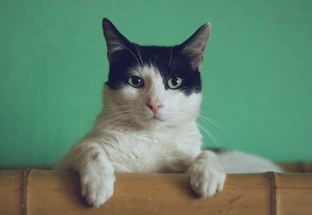 【猫学】めくるめく猫の世界へようこそ。第2回〜猫の日本史〜