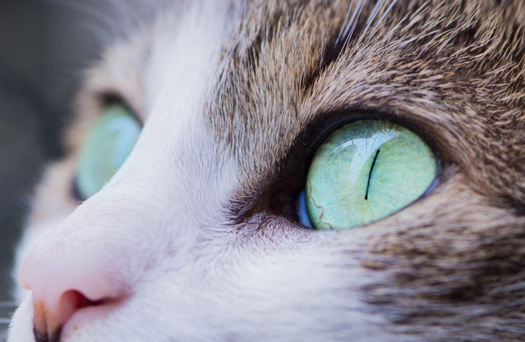 【猫学】めくるめく猫の世界へようこそ。〜目の不思議・前編〜