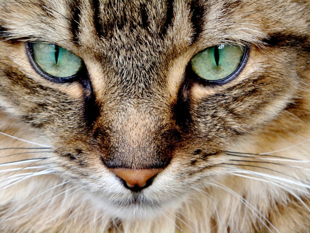 【猫学】めくるめく猫の世界へようこそ。〜目の不思議・後編〜