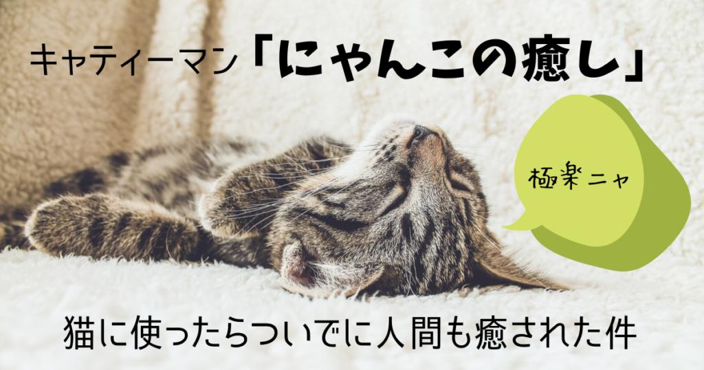 【レビュー】キャティーマン「にゃんこの癒し」を使ったら人間も癒された件【猫グッズ】